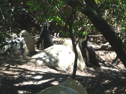 In the underbrush, there are penguin homes, each marked with an address.